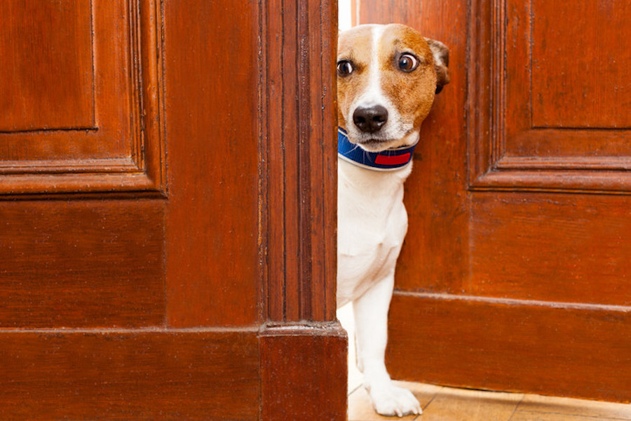 3 Common Signs of Dog Anxiety to Watch Out For